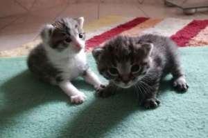 Herzlich willkommen auf dieser Welt ihr zwei. - © www.urlaub-greifenburg.at