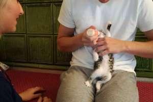 Valentino und Natalie versorgen das Katzenbaby. - © www.urlaub-greifenburg.at