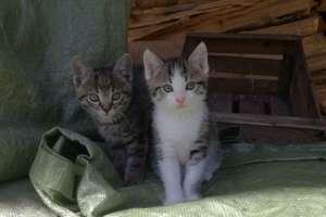 Das sind Maxi und Moritz. - © www.urlaub-greifenburg.at