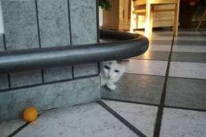Immer wieder lustig Schoki zu beobachten. - © www.urlaub-greifenburg.at