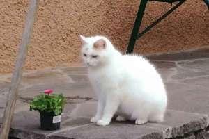 Schoki freut sich wieder draußen sein zu können. - © www.urlaub-greifenburg.at