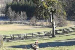 Unsere Hühner werden streng bewacht. - © www.urlaub-greifenburg.at