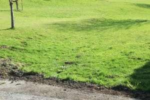 Es grünt so grün! - © www.urlaub-greifenburg.at