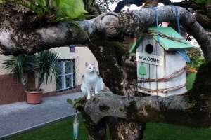 Viele Vogelhäuschen hängen auf unserem Magnolienbaum. - © www.urlaub-greifenburg.at