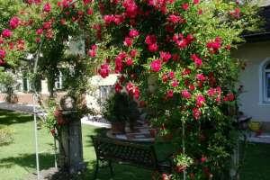 Immer wieder eine Augenweide unser Rosenbogen.  - © www.urlaub-greifenburg.at