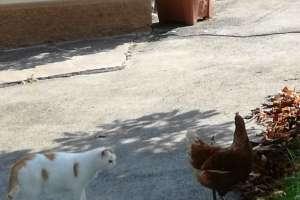 Hallo Agathe, willst du mit mir spielen? - © www.urlaub-greifenburg.at