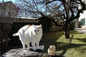 Schoki genießt es wieder draußen zu sein! - © www.urlaub-greifenburg.at