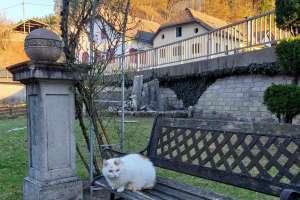 Sie beobachtet alles ganz genau! - © www.urlaub-greifenburg.at