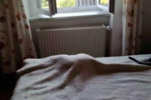 Schoki spielt mit sich selbst verstecken! - © www.urlaub-greifenburg.at