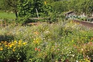 Die wunderschöne Blumenwiese vor der Gartenhütte erfreut Bienen und Schmetterlinge. - © www.urlaub-greifenburg.at