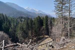 Herrliche Ruhe im Wald! - © www.urlaub-greifenburg.at
