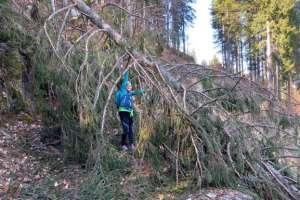 Wanderweg mit Sturmschäden! - © www.urlaub-greifenburg.at